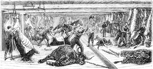 Корову убивают на скотобойне