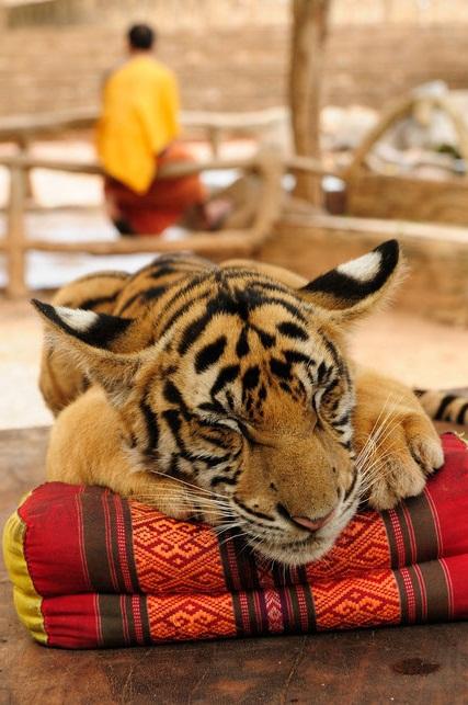 Тигр в храме